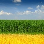 ACE Endorses the Renewable Fuel Standard Integrity Act