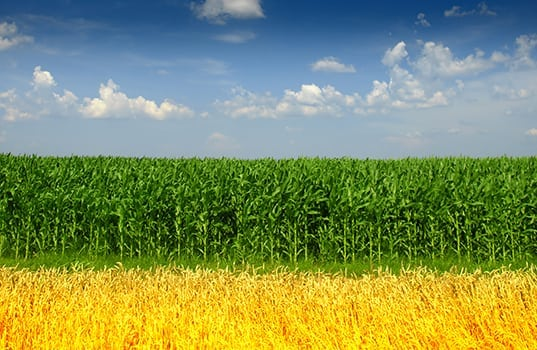 New Study Showing Corn Ethanol Reduces Carbon Emissions by Nearly 50 Percent Cites ACE Low Carbon White Paper