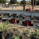 Biofuel Preparation